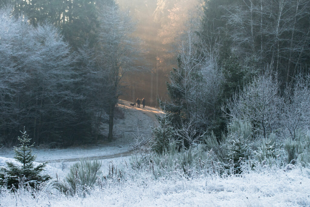 Come enjoy the snow in the beautiful Ardennes !
